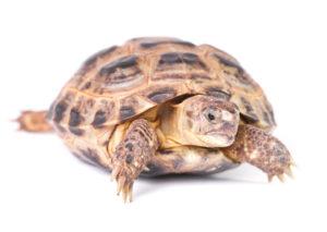 tortoise-photo